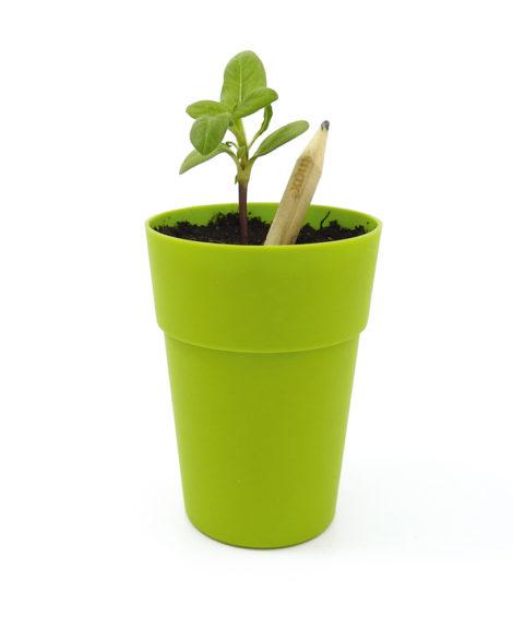Ołówek z nasionami